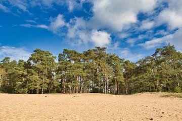 Sanddrift in ihrer schönsten Form von Henrico Fotografie