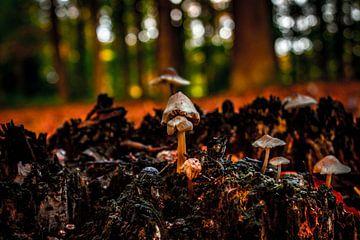 Pilze von b.dutch