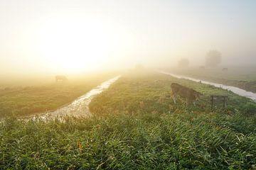 Weiland in de mist sur Dirk van Egmond