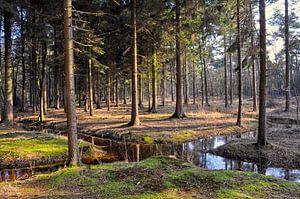 kruispunt van water in het bos
