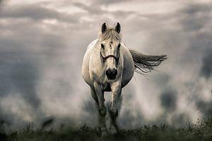 Pferd im Sturm von