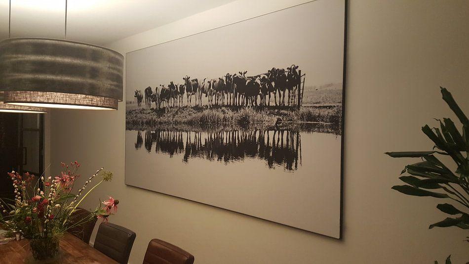 Klantfoto: cows in a row (zwart/wit) van Annemieke van der Wiel, op print op doek