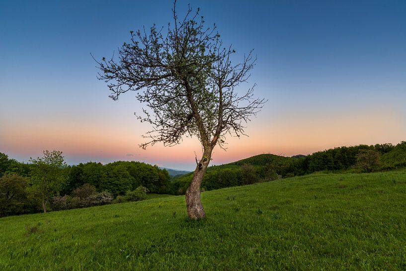 Sunset Tree 2 van Peter Oslanec