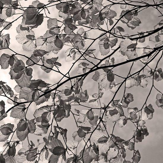 Swinging leaves