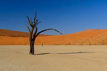 Dode boom in Dode Flei van Denis Feiner