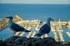 Zeemeeuwen op een rots met uitzicht op de haven van Denia