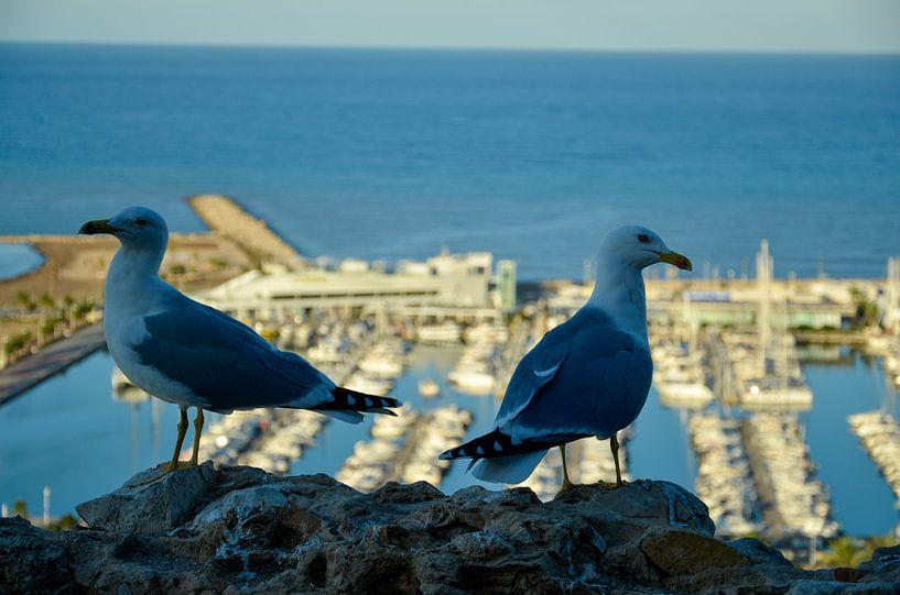 Zeemeeuwen op een rots met uitzicht op de haven van Denia van LuCreator