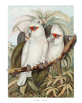 Deux Perroquets Blancs van Marja van den Hurk