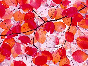Arty Autumn (Kunstzinnige Herfst) van Caroline Lichthart