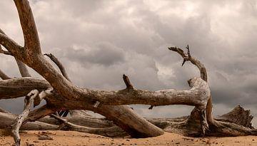 Totholz auf Sand von Corrie Ruijer