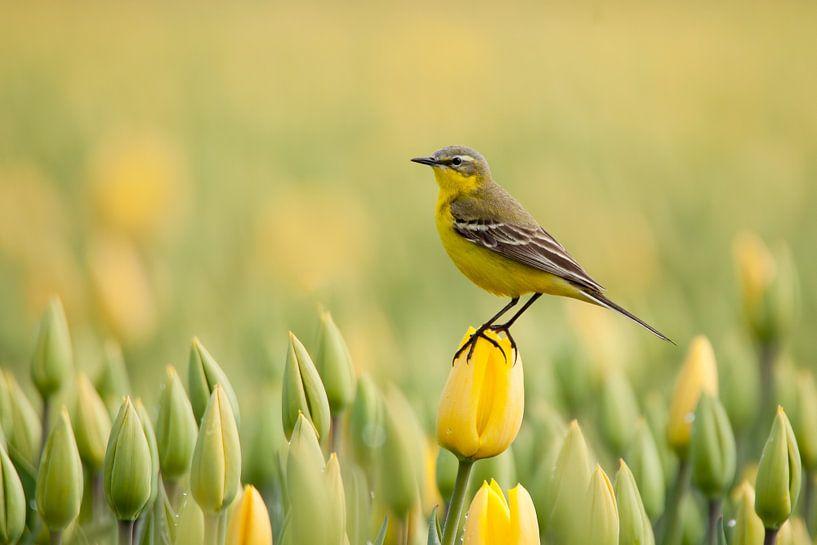 geel van Ina Hendriks-Schaafsma