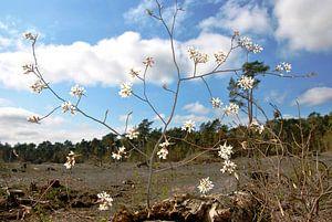 Blüte im Wald
