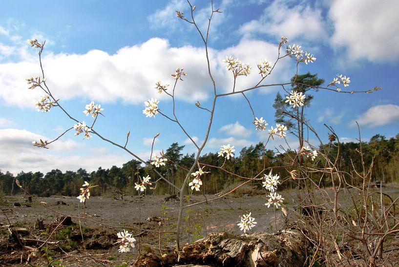 Blüte im Wald von M de Vos