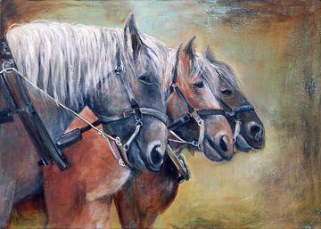 zeeuwse paardenkracht.. ( de 3 musketiers) van