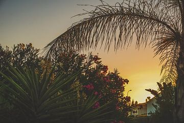 Perfecte zomeravond in Portugal met zonsondergang en palmboom von Nynke Nicolai