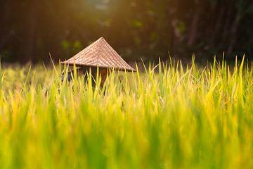 Reisfeld von Jeroen Langeveld, MrLangeveldPhoto
