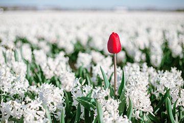Red tulip van Yana Spiridonova