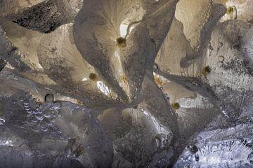 Hyazinthen in Eis 2 von Marc Heiligenstein