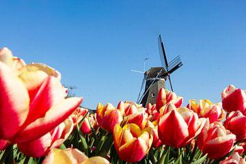 Typisch Nederland ..bollenveld met molen-1 van Natural Charms Fotografie