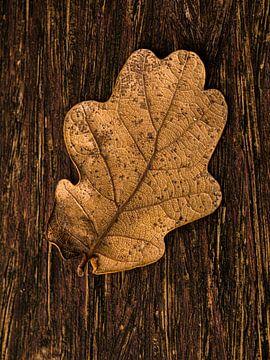 Herbstblatt auf Holz von FotoSynthese
