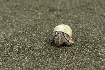 Heremietkreeftje op wandel op zwart strand van Tim Verlinden