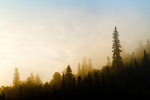 Forêt Noir II van