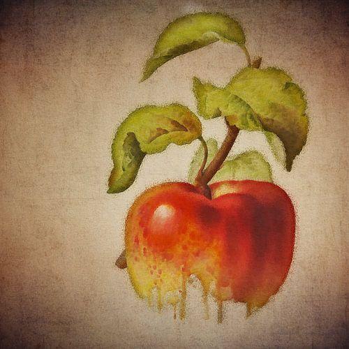 Pomme rouge - Dessin antique d'une pomme rouge sur