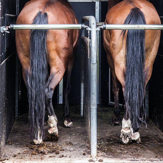 Paardenbenen in trailer: Nice buttocks! van Ramona Stravers
