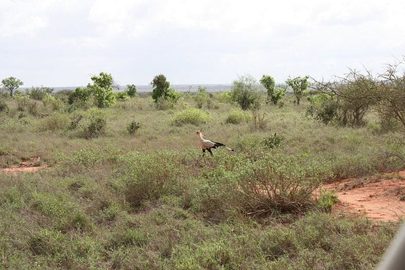 Rare vogel van Gilian Fijen