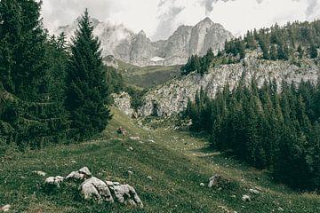 Wandelen in de Wilder Kaiser van Sophia Eerden