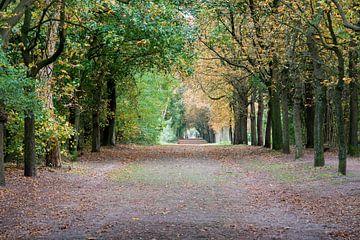 autum forest van Compuinfoto .
