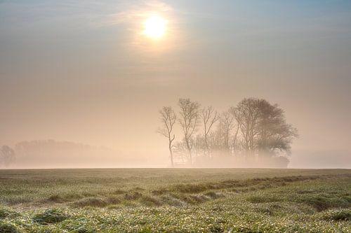 Gouden ochtendnevel op de velden  bij Keiem Diksmuide Westvlaanderen