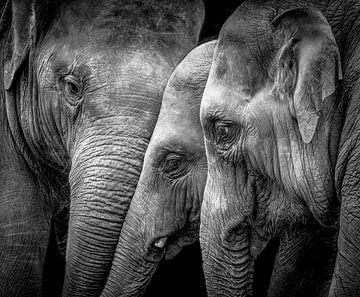 Elefanten von Karel Ton