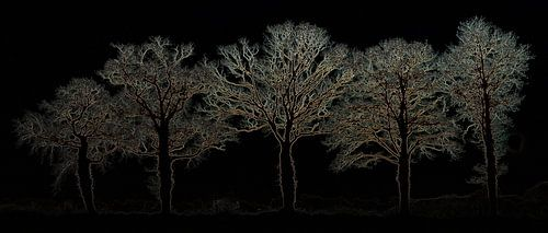 Vijf bomen (nacht)