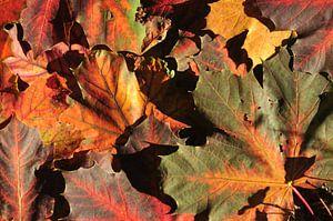 kleurrijke herfst van Evert-Jan Woudsma
