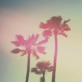 Californian Palm trees van Pascal Deckarm