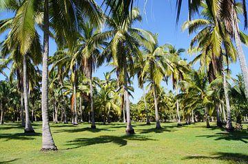 palmbomen op eiland in de mangroves van Mazunte van Jadzia Klimkiewicz
