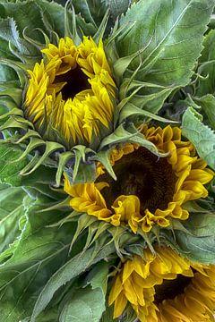 Zonnebloemen van marleen brauers