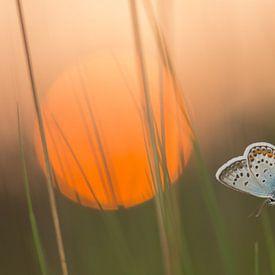 Slapende vlinder van Douwe Schut
