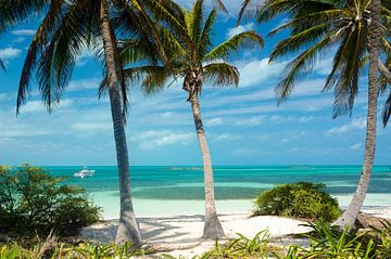 Paradies - Isla Contoy (Mexiko) von Rob Bout