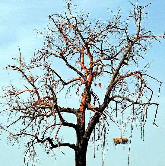 Hangend nest van Sigrid Klop