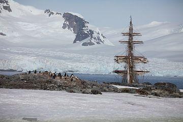 Antarctica Petermans Island van ad vermeulen