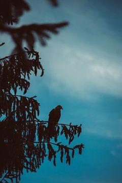 Silhouet van een roofvolgel in een boom van Veri Gutte