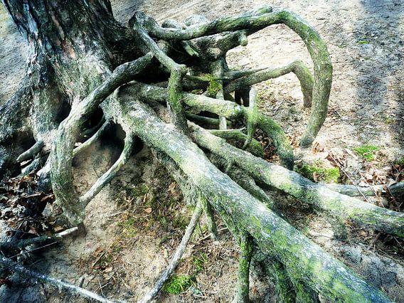 Tree Magic 7 van MoArt (Maurice Heuts)