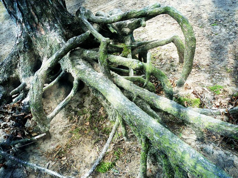 Tree Magic 7