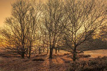 Sonnenuntergang durch die Bäume von Tim Abeln