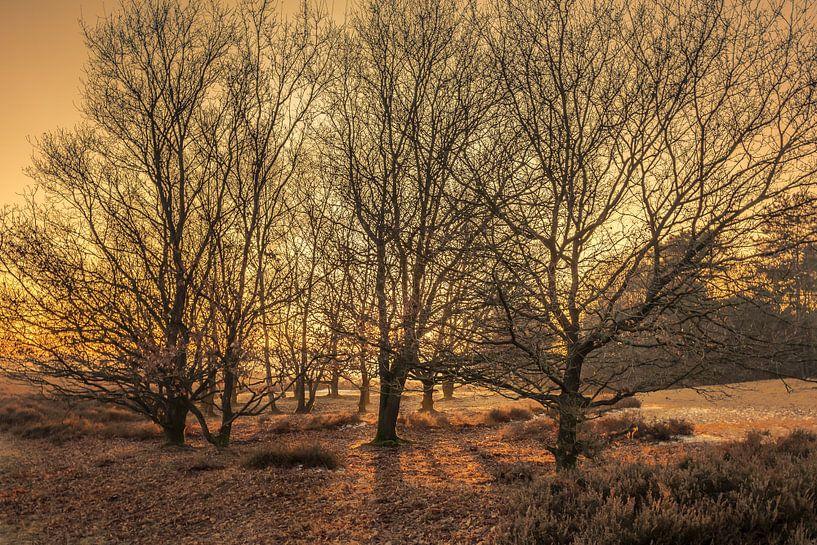 Zonsondergang door de bomen van Tim Abeln