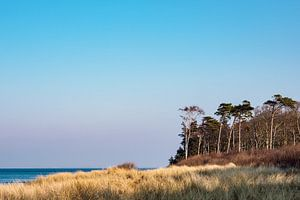 Landscape on shore of the Baltic Sea.