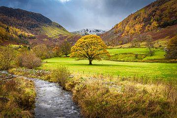 Herbst im Lake District, Großbritannien von Rietje Bulthuis