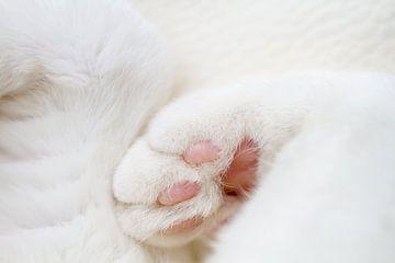 Kattenpootjes van Qeimoy